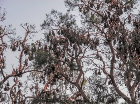 Outback Australia (1 of 2)-2