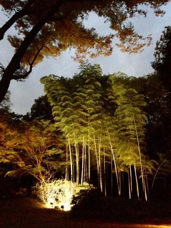A small bamboo grove at the garden.