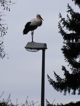 4-Storch-Foto-Nadia-Baumgart