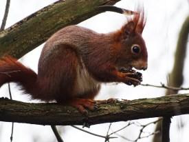 5-Eichhörnchen-Nadia-baumgart