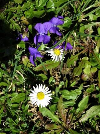 Blumen im Rottal - Bad Birnbach