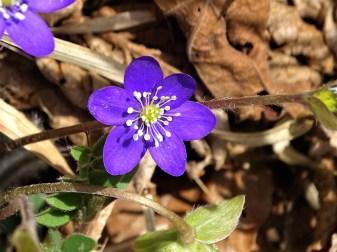 Blume-Piemont-Madonna-del-Lago