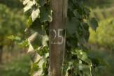 #114 Grape Vine 25
