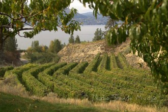 #118 Kettle Valley