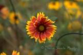 #210 October bloom DSC_9634