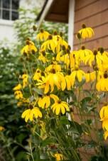 Flowers in Steveston