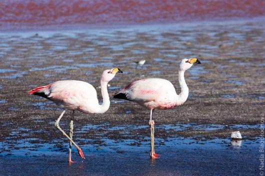 FlamingoCouple