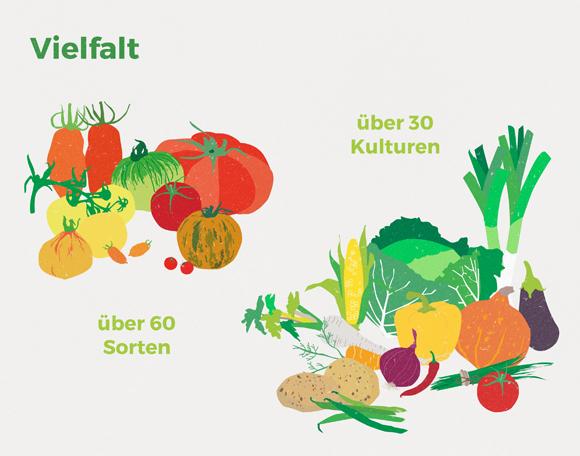 wirgarten_illustration_vielfalt_580px
