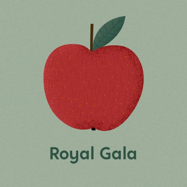 Illustrierte Apfelsorten Royal Gala