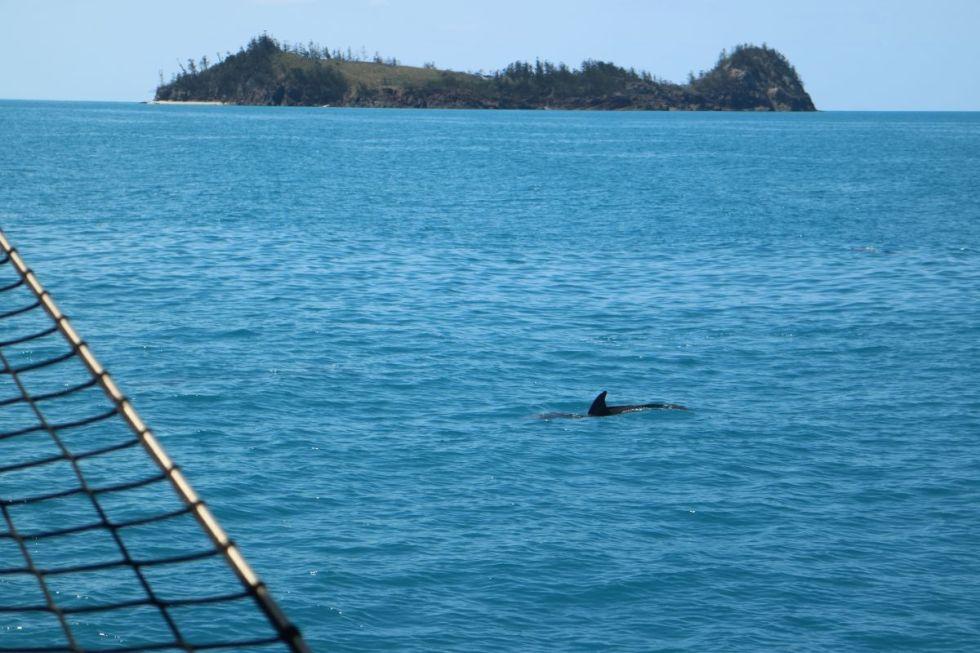 Delfin Whitsundays