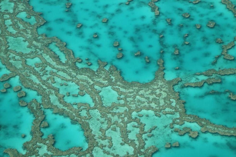 Ein Riff der Whitsundays