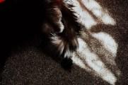 light on cat fur Home Photography