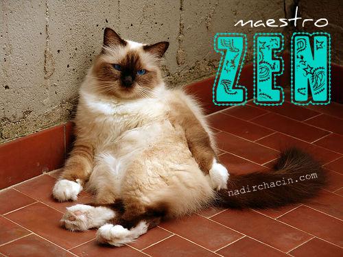 Maestro ZEN
