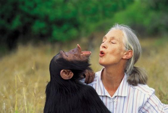 Jane with Uruhara pant-hooting, 1996.
