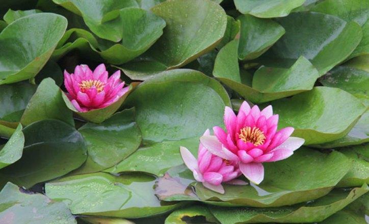 lotos-Nadir-Chacin