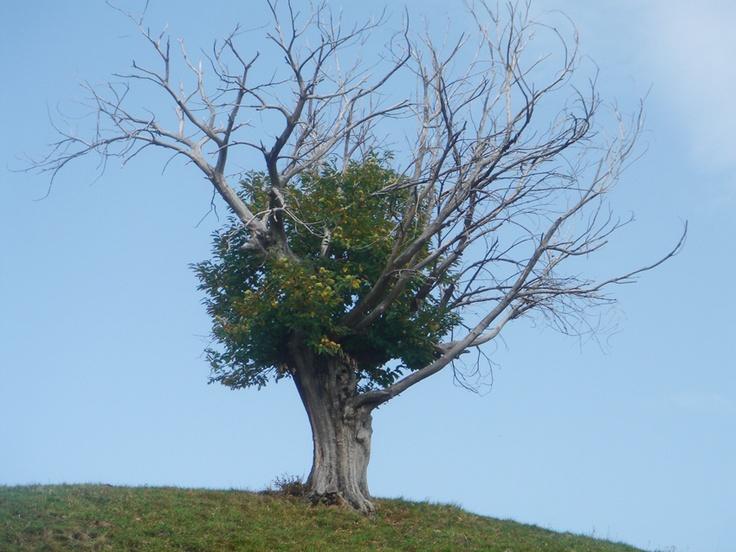 I wanna be a tree #sersiendo