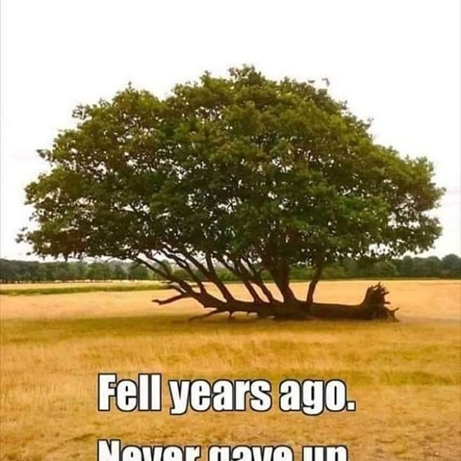 If you fall, get back up. If you can't get up, keep reaching, keep growing. #NeverGiveUp