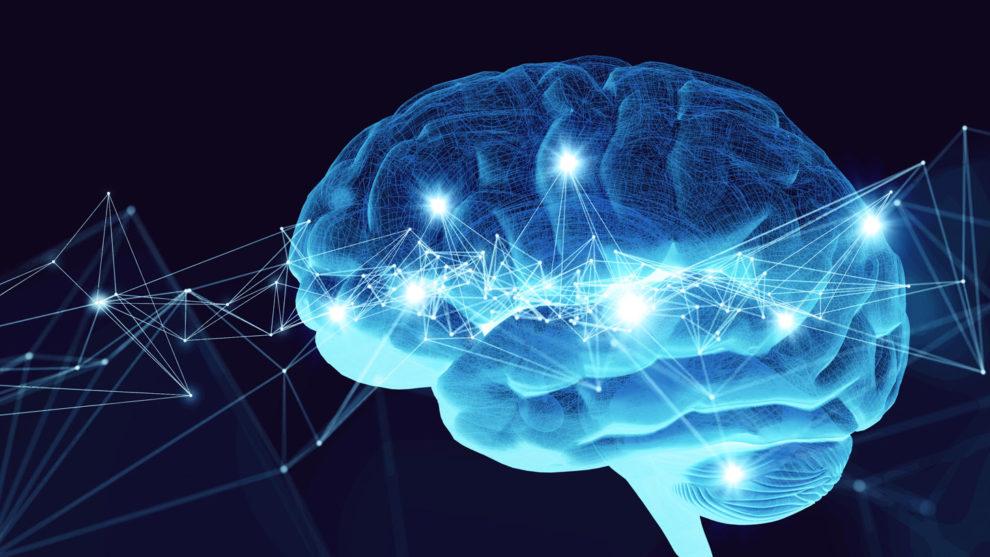Stören Immunzellen das Hirnwachstum im Alter?