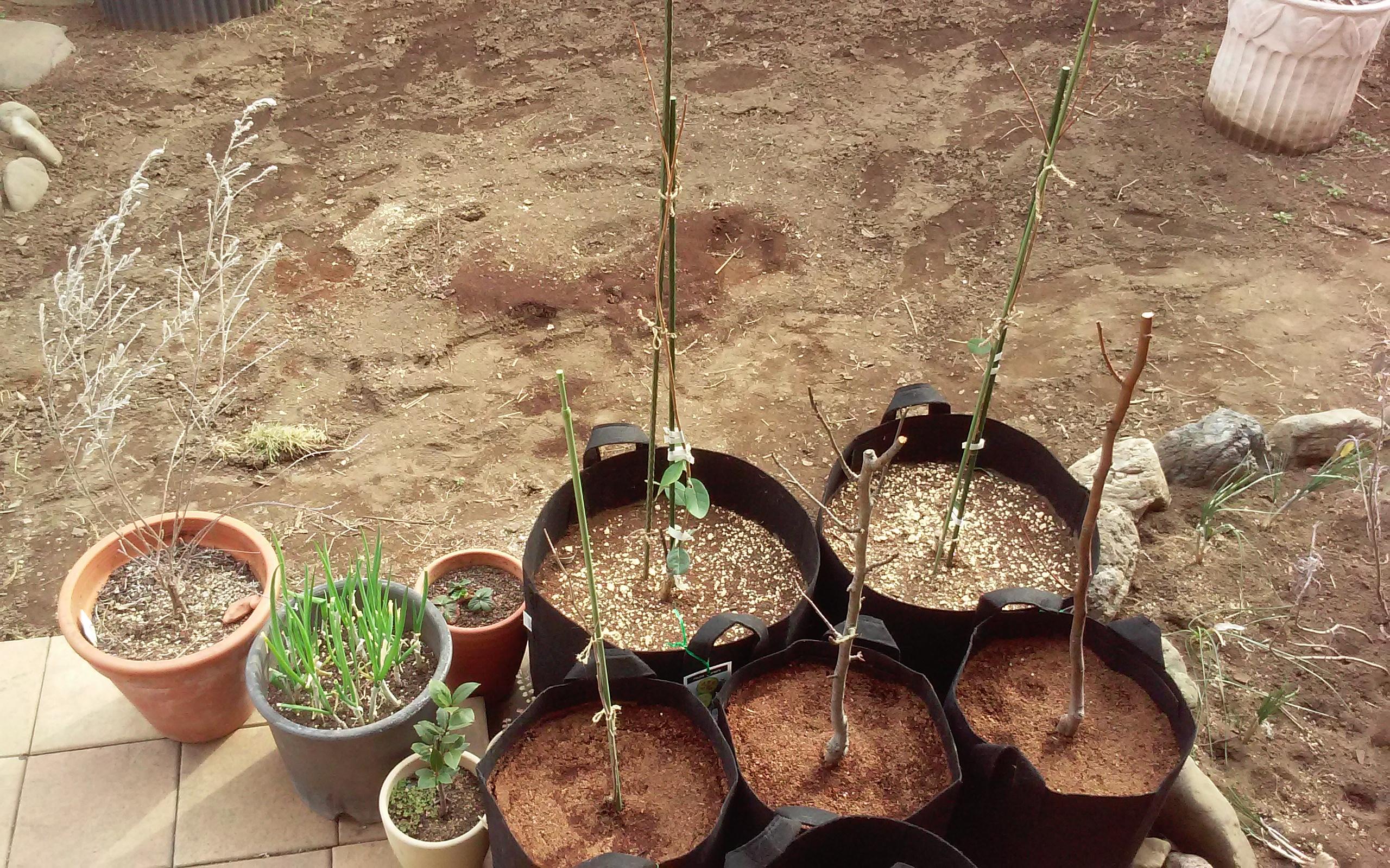 鉢植えの用土は植え付けから半年くらいで次第に減って行きます