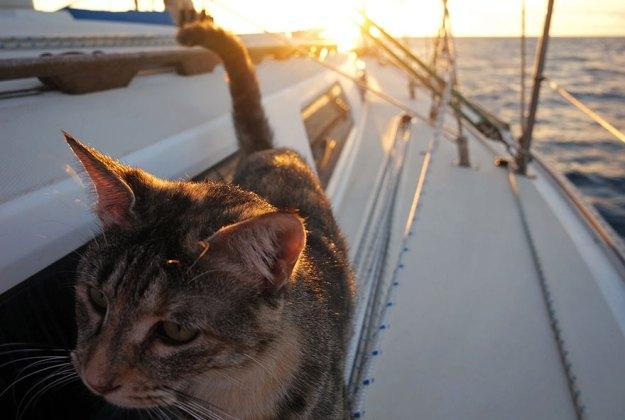 couple-sells-everything-travels-world-cat-matt-jessica-johnson-18