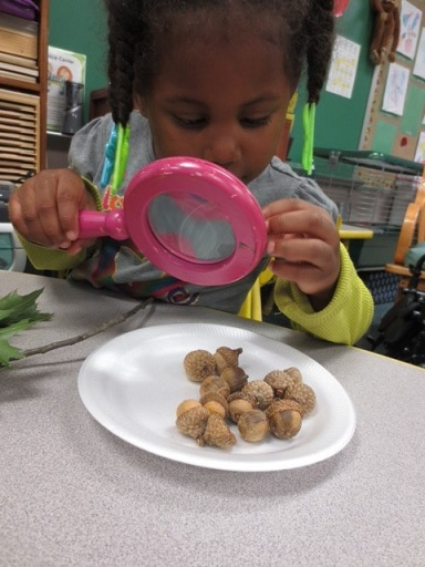 acorn science Lemmon 2014