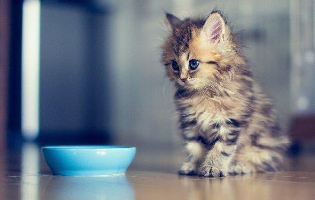 Молитва о кошке чтобы нашлась