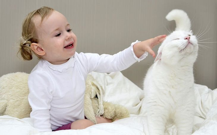 Молитва чтоб вернуть кота. Как заставить убежавшую домашнюю кошку вернуться домой Заговор найти пропавшего кота