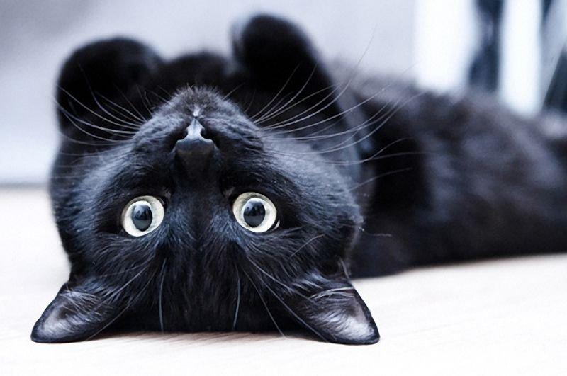 Silná čierna mačička fucked
