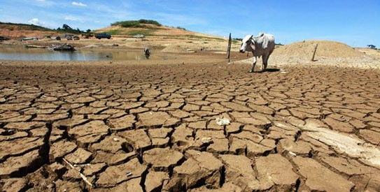 India at risk of food shortage due to climate change, says study