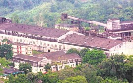 Tuli paper mill on verge  of closure