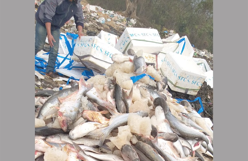 1700 kgs of Formalin laced fish seized in Nagaland
