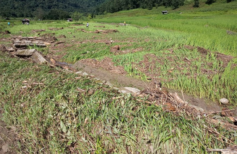 40 paddy fields destroyed by  flashflood at Thekrejuma, Dzüleke