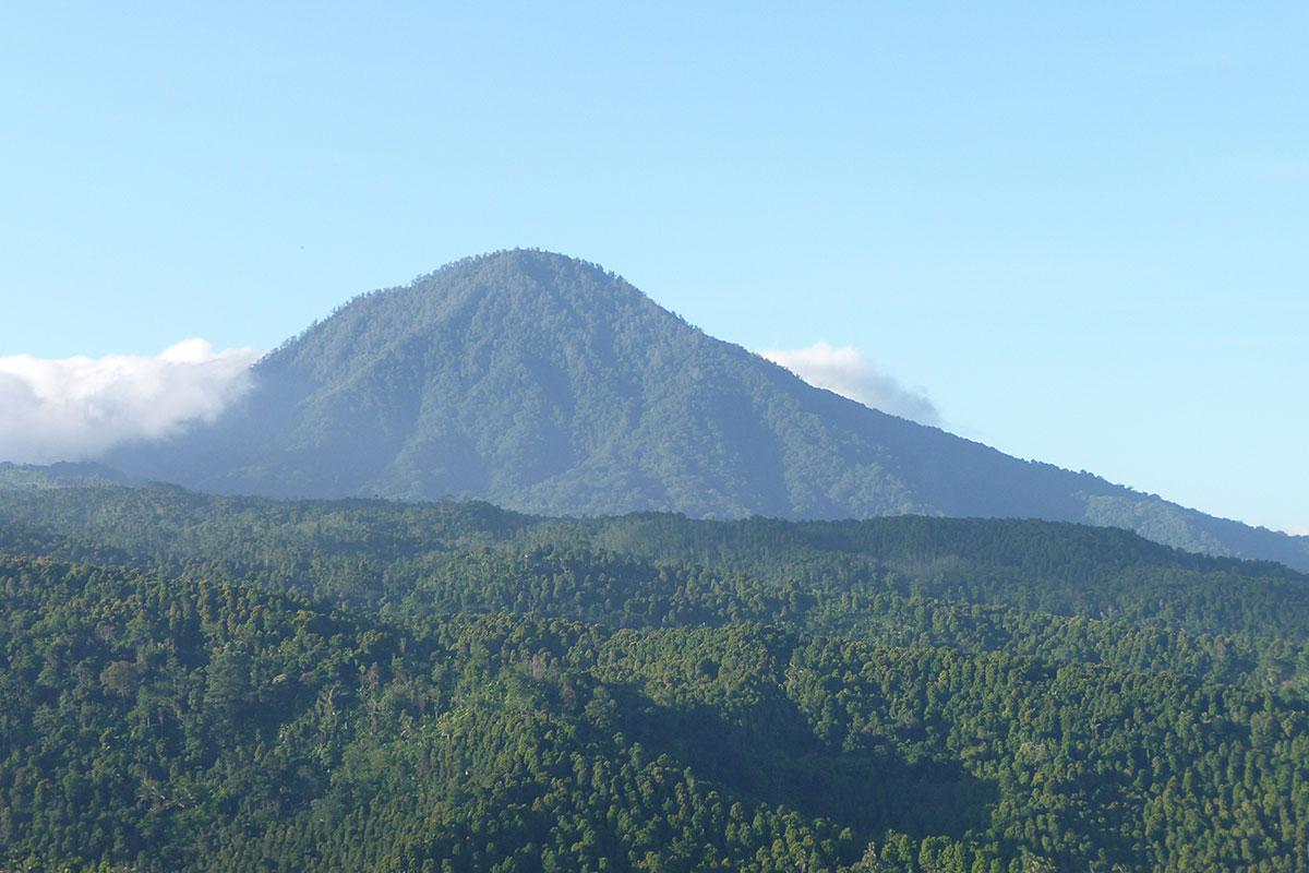 Bird Habitat in the Batukaru Mountain & Tamblingan Area