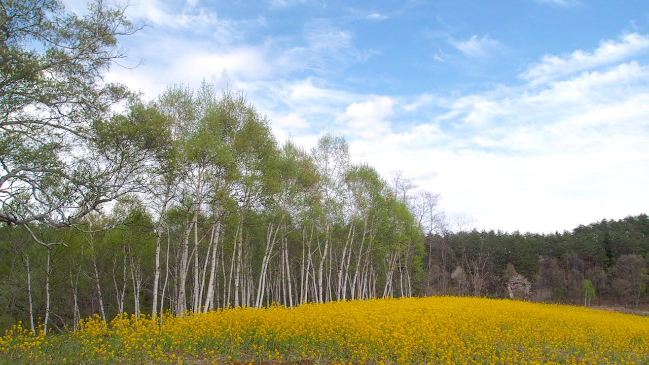 nakayama plateau in omachi, nagano