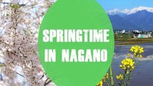 springtime nagano cover