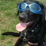 犬の熱中症対策は?室内で飼うときの注意や対策グッズと万一の症状をチェック