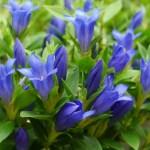 敬老の日にプレゼントする正式な花や人気の花の種類は?花言葉やNGも考慮