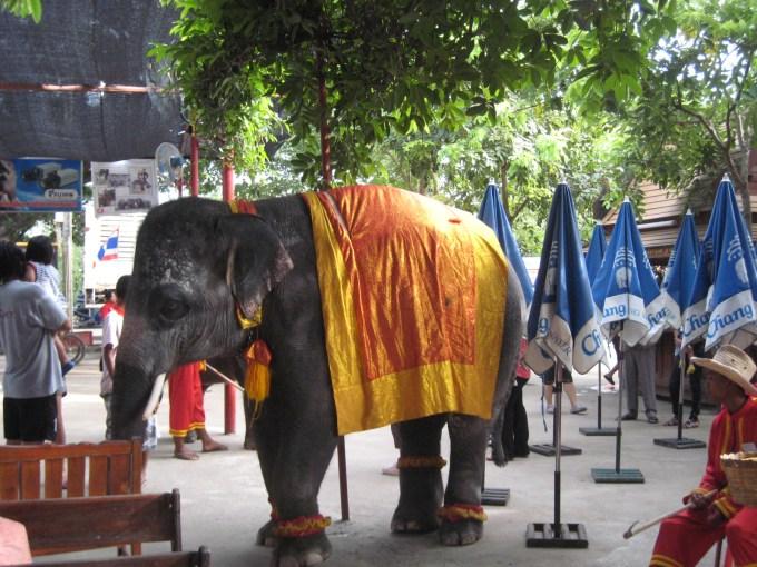 タイで象乗りツアー体験