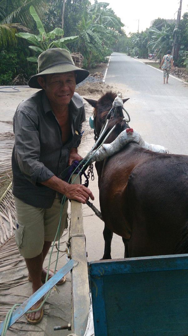 ベトナムでは牛車に乗れる