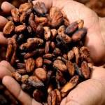カカオチョコレートの効果とは?健康と美容に効く?カロリーと産地の違い