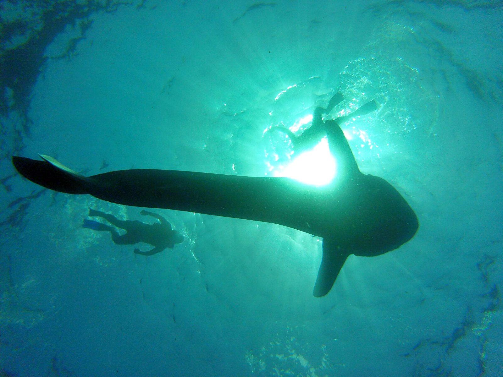 Blogerzy podrózniczy pływa z rekinami wielorybimi w Meksyku.