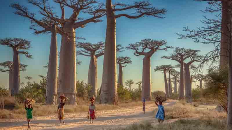 মাদাগাস্কার: যেখানে অভাব ও সৌন্দর্যের বাস পাশাপাশি