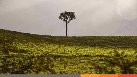 আমাজন রেইন ফরেস্টের নিধন বেড়েছে ৮৫ শতাংশ