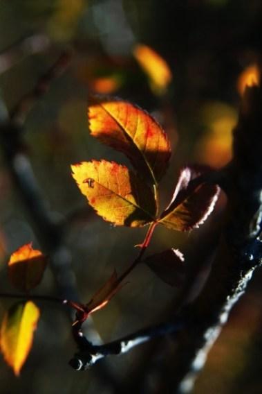 Есенно трио