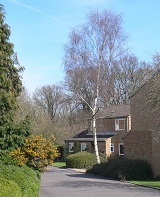 Photograph of Bowes Wood neighbourhood