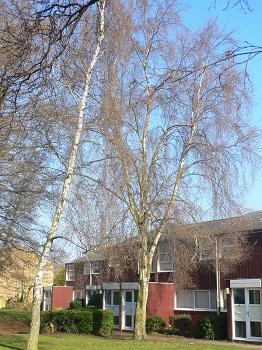 Photograph of Millfield neighbourhood