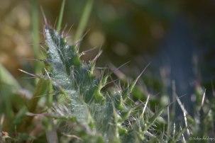 Blumenwiese-5
