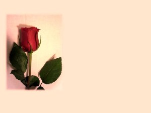 mothers-day-613935_640