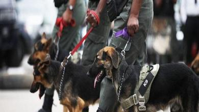 Photo of COVID-19: Nigeria may begin use of dogs for detections