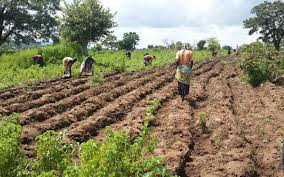 Photo of Govt targets two million farmers in agric intervention scheme